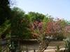 Vign_tchad_tchad_voyage_de_chasse_au_tchad_36_photoredukto