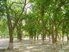 Vign_tchad_tchad_voyage_de_chasse_au_tchad_72_photoredukto