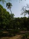 Vign_tchad_voyage_de_chasse_au_tchad_96_