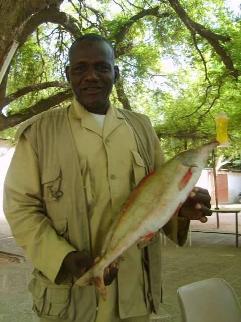 tchad_tchad_voyage_de_chasse_au_tchad_14_photoredukto